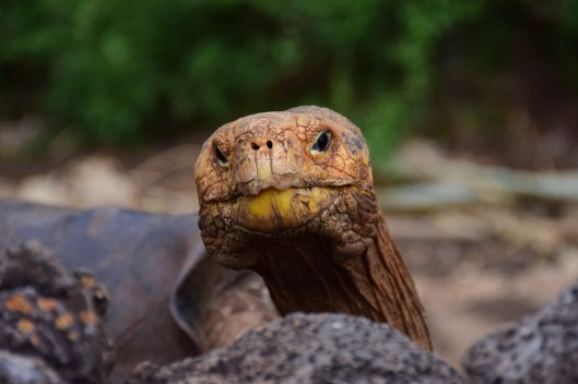 Galapagos turtles look too much like Star Trek villians.